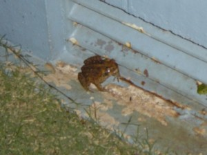 Yes, we have hit cane toad country